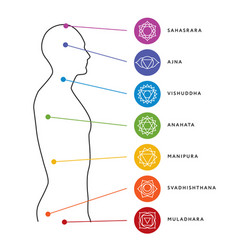 Chakra system of human body energy centers vector