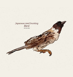 Japanese reed bunting or ochre-rumped bunting vector