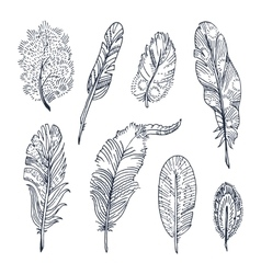Sketched Feathers collection vector image
