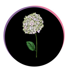 Beautiful phlox flower in a black circle floral vector