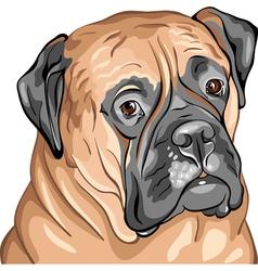 Bullmastiff vector image