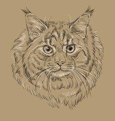 maine coon cat on brown background vector image
