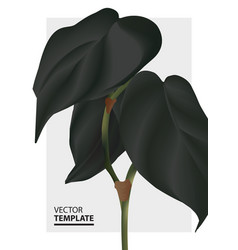 modern black contrast foliage monstera leaf vector image
