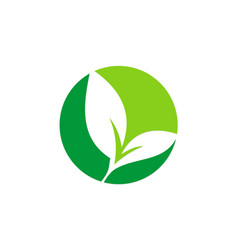 green leaf seed plant logo vector image vector image