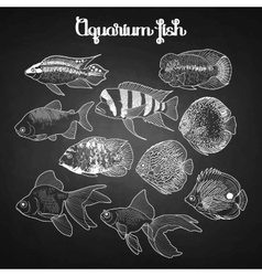 Graphic aquarium fish vector