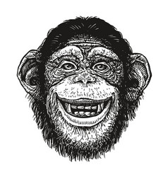 hand drawn portrait chimpanzee funny monkey vector image