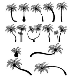 set tropical palm trees with leaves mature vector image