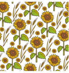 sunflowers and wheat spikelet autumn harvesting vector image