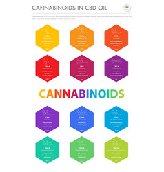 Cannabinoids in cbd oil with structural formulas vector