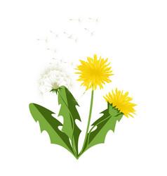 Dandelion icon blowing garden botany floral vector
