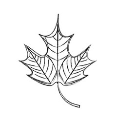 mapple leaf isolated icon vector image