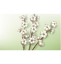realistic cotton branches with flowers and stems vector image