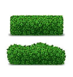 Realistic detailed 3d green hedges set vector
