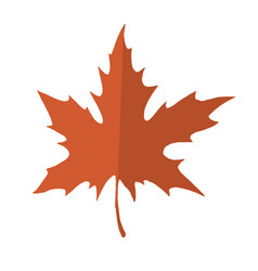 Red and orange maple leaf isolated on a white vector