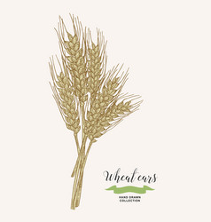 Wheat ears rustic bouquet design hand drawn vector