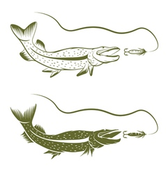 set of pike and lure design template vector image