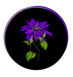 Beautiful clematis flower in a black circle vector