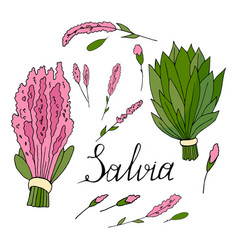 branches and flowers of sage hand drawn on a vector image