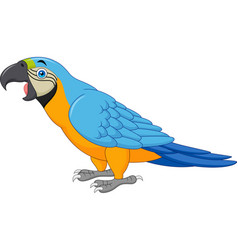 cartoon blue macaw isolated on white background vector image