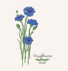Cornflowers bouquet wild flowers set rustic vector