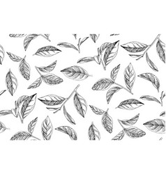 seamless pattern with hand drawn tea leaves vector image