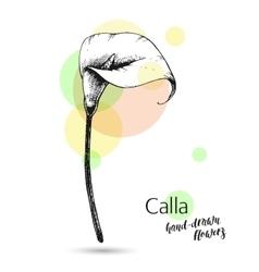 Calla flower for wedding or birthday card vector image vector image