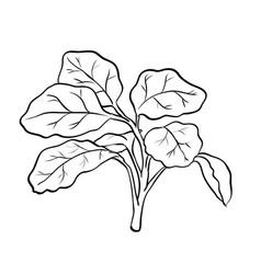 Isolated watercress- hand drawn vector