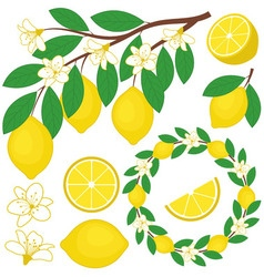 Lemon Set vector