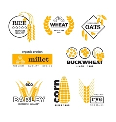 Organic wheat grain farming agriculture vector image