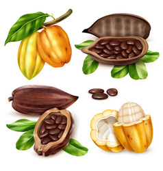 Realistic cocoa icon set vector