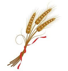 spikelets wheat vector image