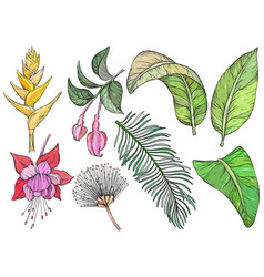 tropical flowers and leaves set hand drawn vector image