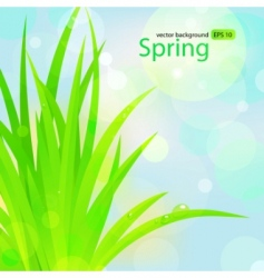 spring grass with water drops vector image