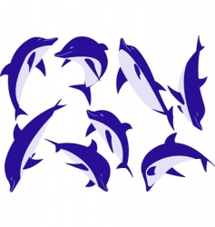 animal dolphins vector image