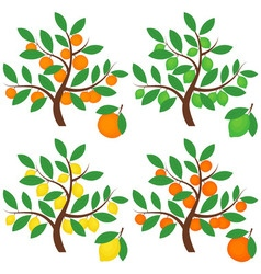 Citrus Trees vector