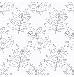 Hand drawn curry leaves and branch outline vector image