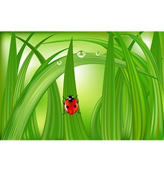 Ladybug On Green Grass vector image vector image