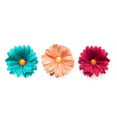 set colored chrysanthemum flowers top view vector image