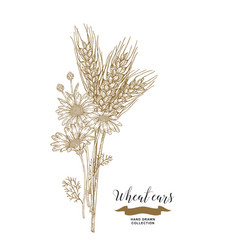 Wheat ears and chamomiles bouquet hand drawn vector