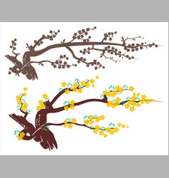 Apricot blossom vector