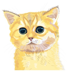 cute fluffy british kitten vector image