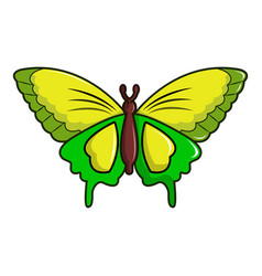 Goliath birdwing butterfly icon cartoon style vector