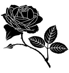 rose bud vector image