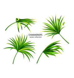tropical chamaerops leavesset plants isolated vector image