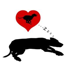 Dog dreams vector image vector image