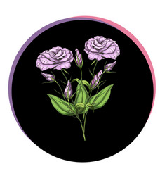 Beautiful eustoma flowers in a black circle vector