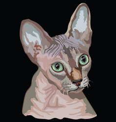 colored sphynx cat vector image