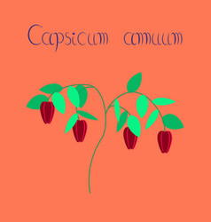 Flat on background plant capsicum vector