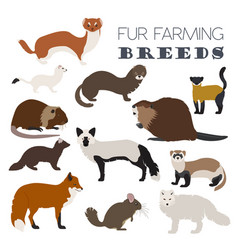 Fur farming flat design vector