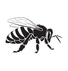 graphic bee vector image